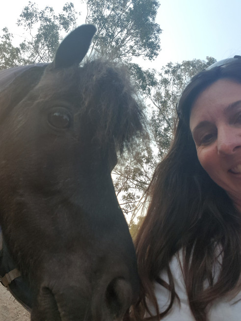 miniature horse with pet sitter