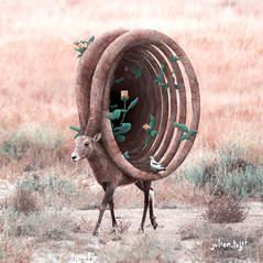 Wild Echoes, Julien Tabet, Digital, 2020