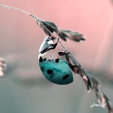 Aquanimal - Ladybug, Julien Tabet, Digital, 2018