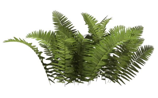 Download-Plants-PNG-HD-379.png