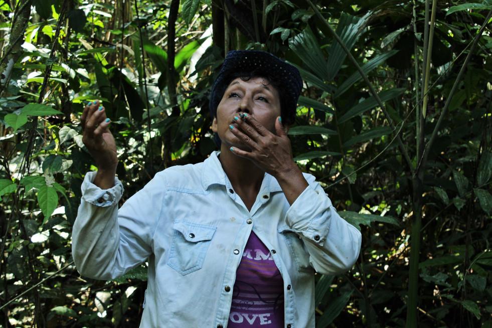La conexión con la selva