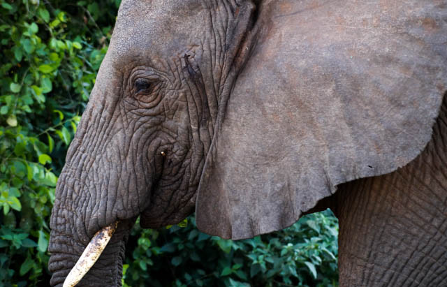 Tanzania – Safari