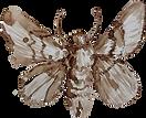 Logo Bombyx.png