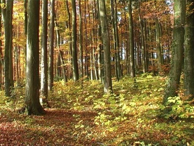 Wald2.jpg