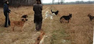 Anne walking dogs in red lake.jpg