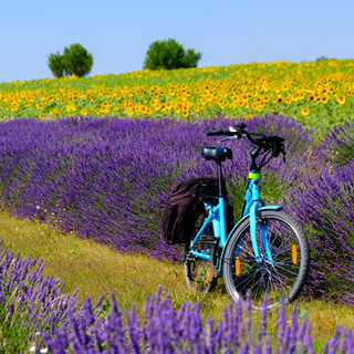 electric-bicycle-in-the-lavender-and-sun