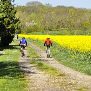 mountain-bikers-during-a-sunning-spring