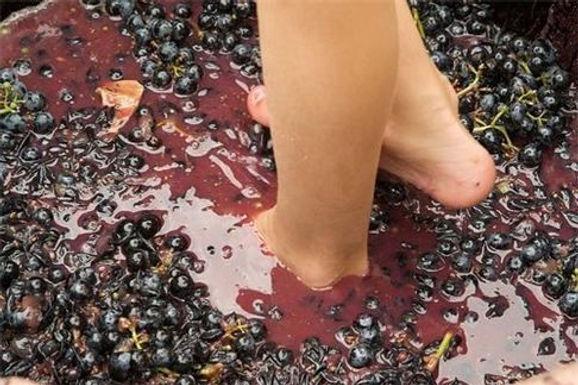 Grape Stomping