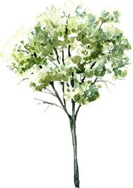 green_trees4.png