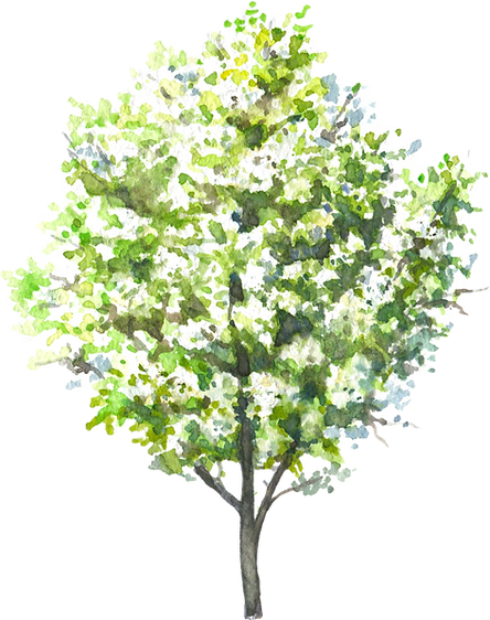 blooming_trees5.png