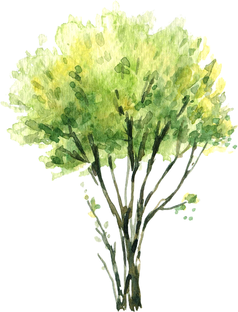 green_trees9.png