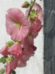 Sitayoga, blomst.jpg