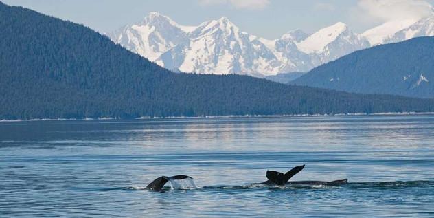 humpback_whales.jpeg