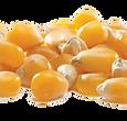 Un-Popped Popcorn Kernels