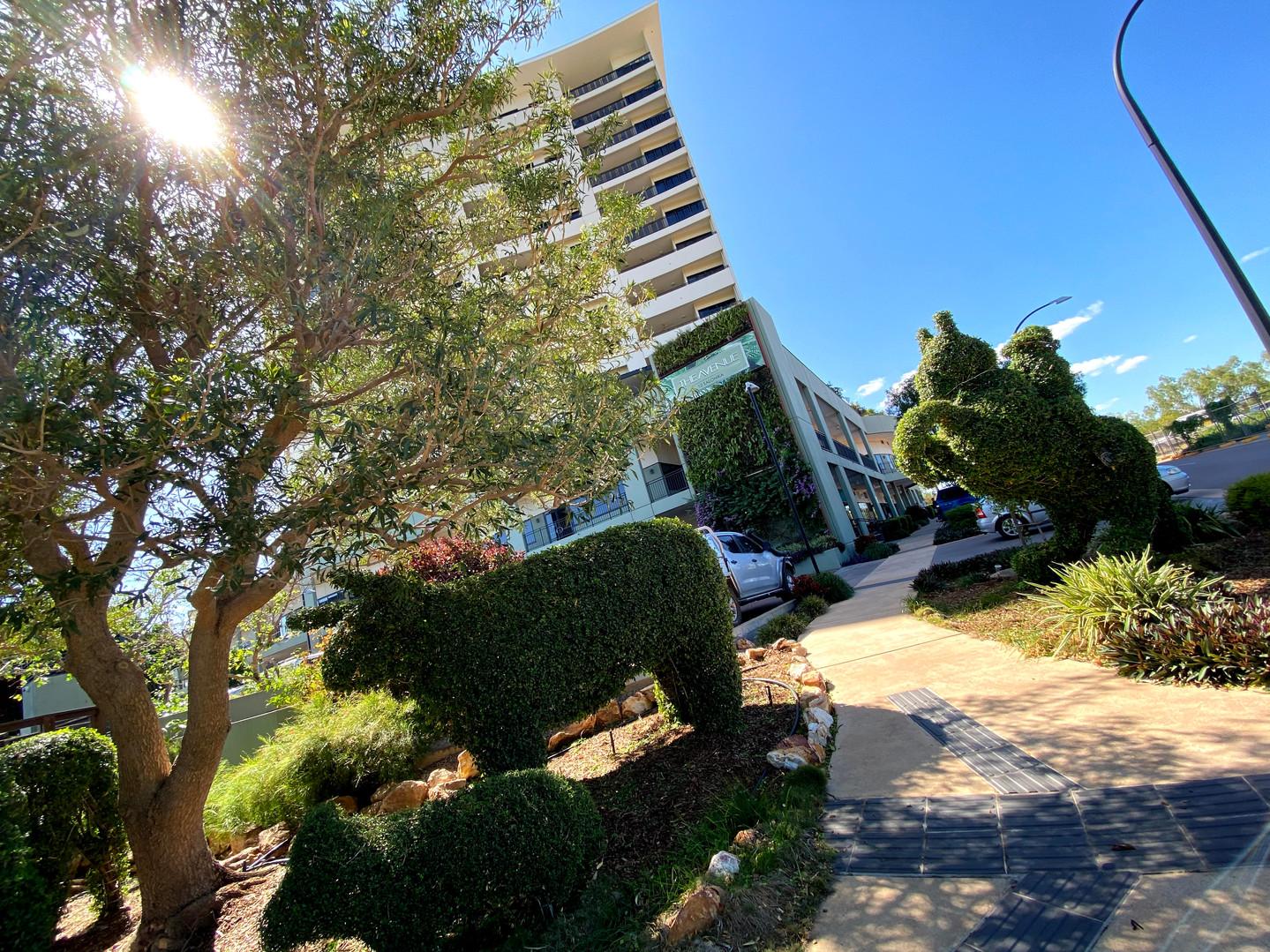 The Avenue Darwin Topiary