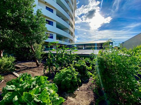 Veggie Gardens at The Avenue
