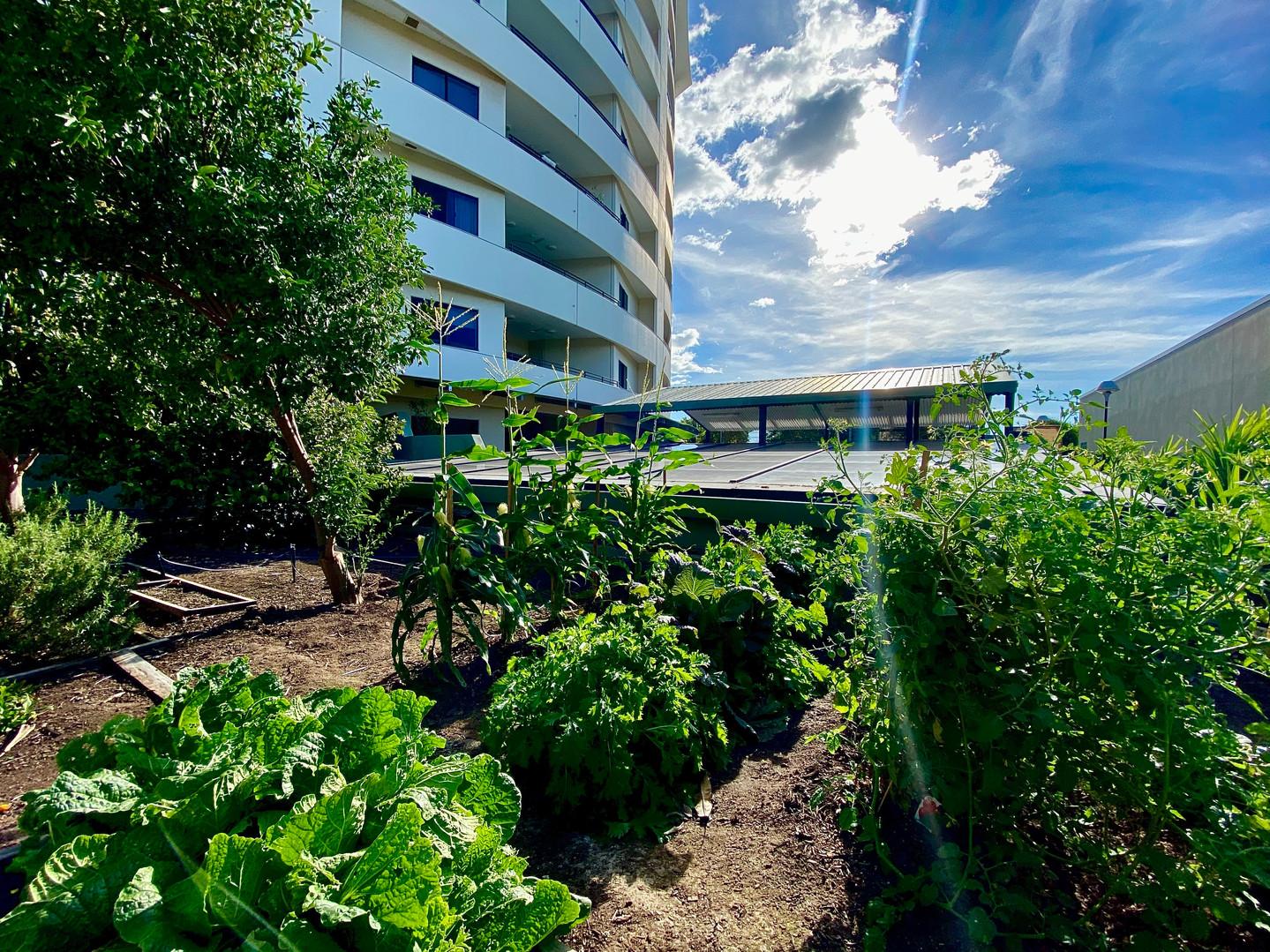 The Avenue Residential Veggie Garden
