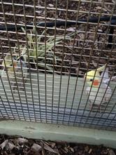 Bird Aviary (121).JPG