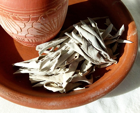 Californian White Sage Leaves Smudging Herb