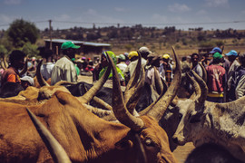 Cattle Market, Ethiopia