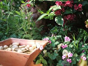 Garden birdpond, Linden bed and Breakfast