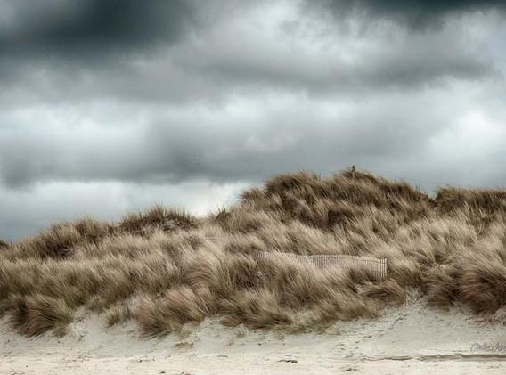 Battue par les vents1.jpg