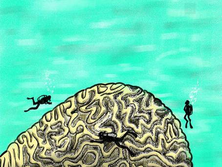 Studying The Ocean's Depths