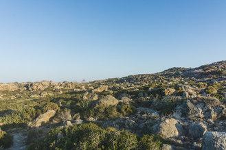 Greek vegetation