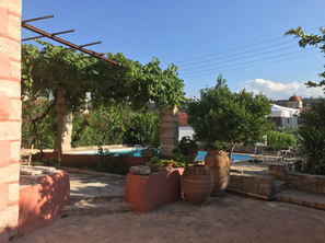 Covered terrace with vine