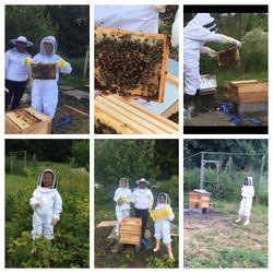 Betsy Baynham - Bees