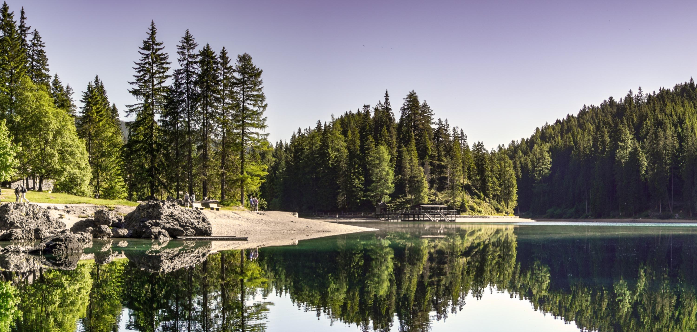 conifer-daylight-environment-evergreen-4