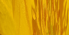 Yellow Banner 1.png