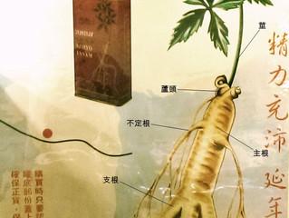 植物人參簡介