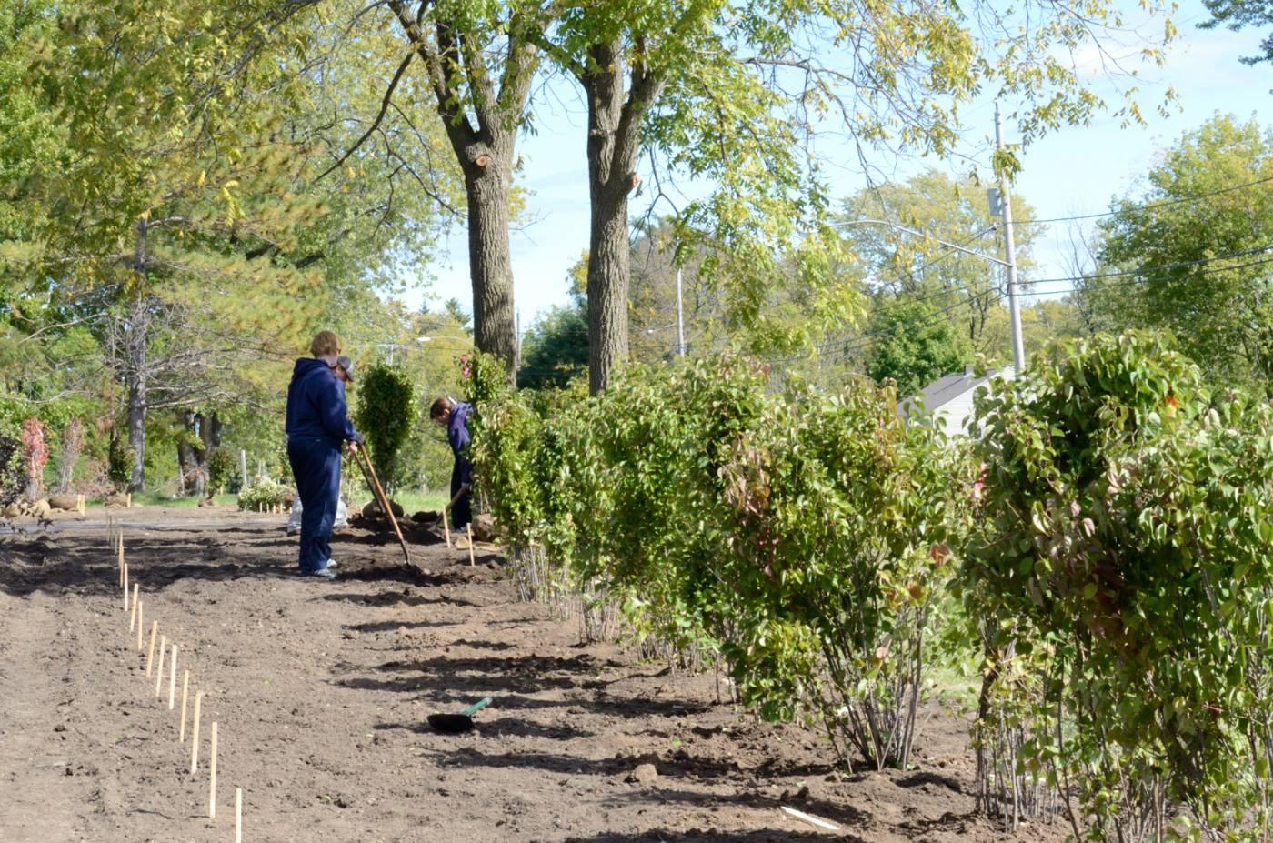 Perimeter shrubs