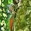 Thumbnail: MONTEVERDE CLOUD FOREST COMBO