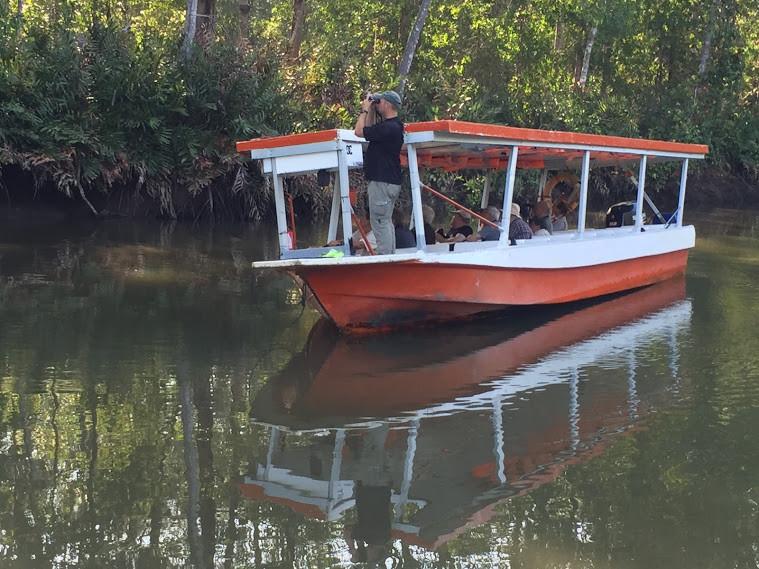 Mangrove Boat Tour.JPG
