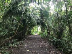 Tunel Trail.JPG
