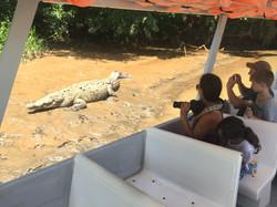 tornado 100 year old crocodile