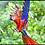 Thumbnail: BIRD WATCHING TOURS