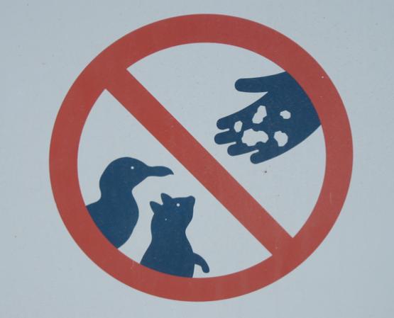 No alimente los animales