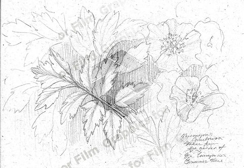 Flower and plant sketches
