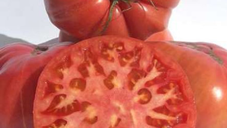 Tomate Rosa