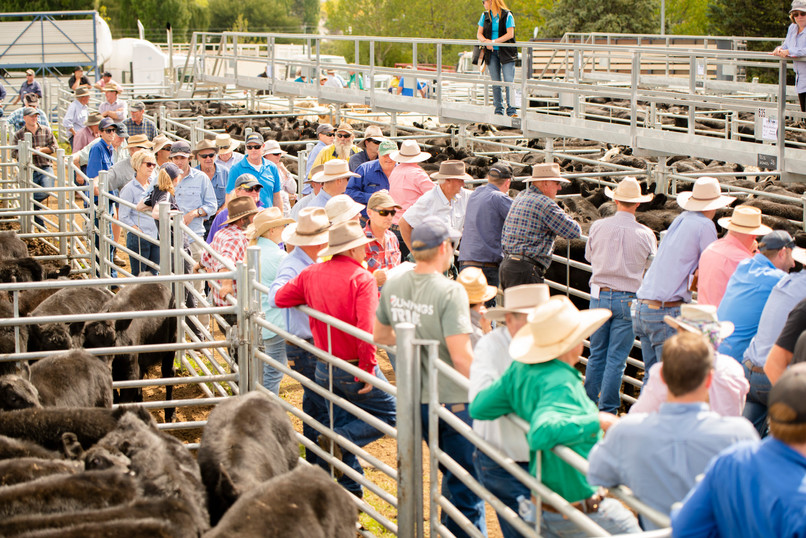 3rd April Calf Sale