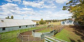 Curry Flat sheep Yards.jpg