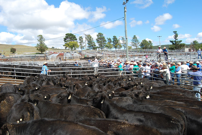 20th March Calf Sale