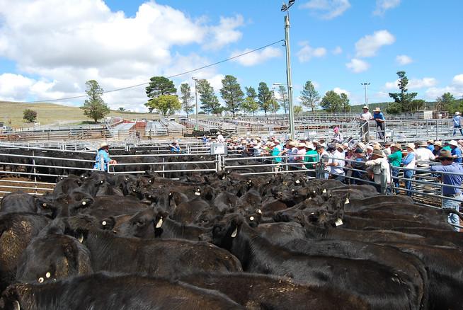 20th March Calf Sale
