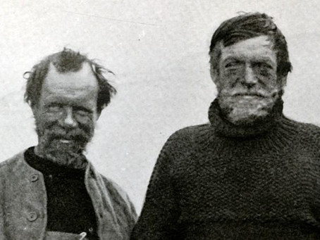 Wild on Shackleton