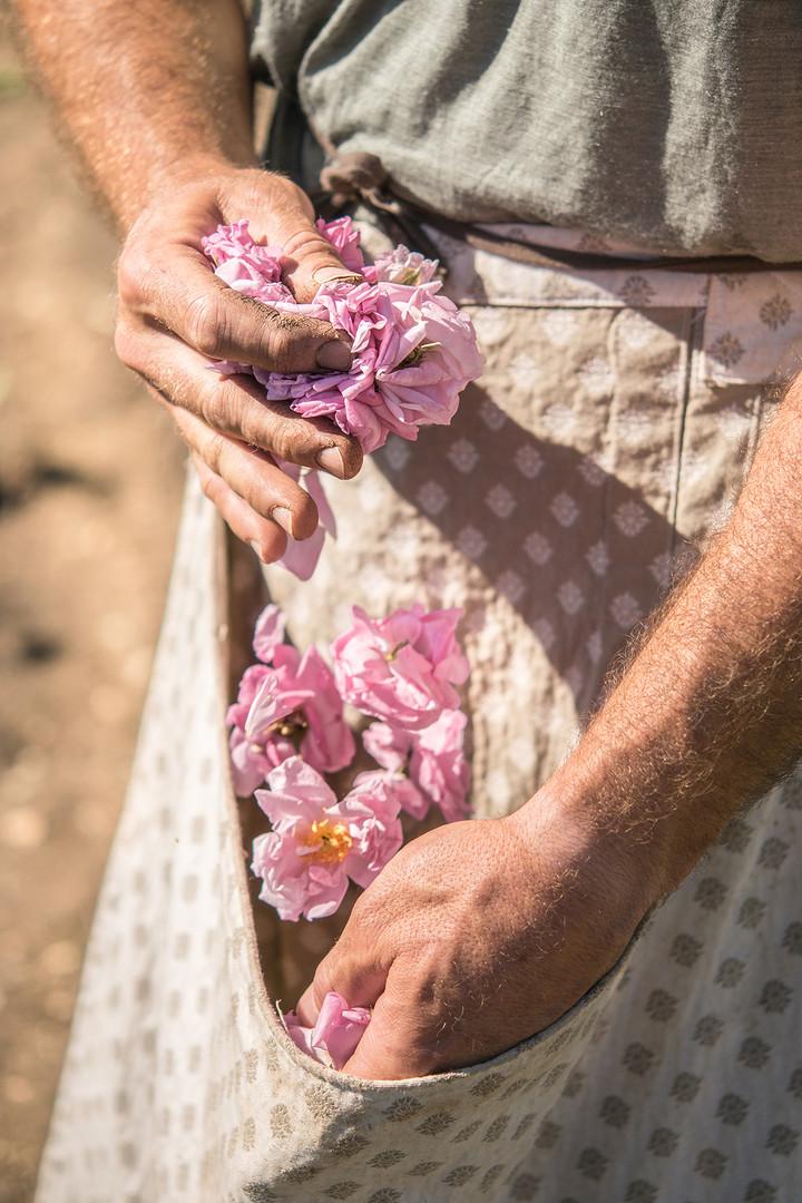 photographe-provence-parfum-ladoucesauvagerie-10
