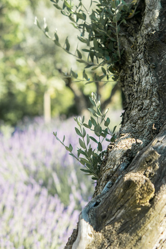 photographe-lifestyle-provence-ladoucesauvagerie-44