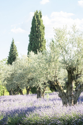 photographe-lifestyle-provence-ladoucesauvagerie-43